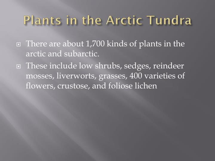 Plants in the Arctic Tundra