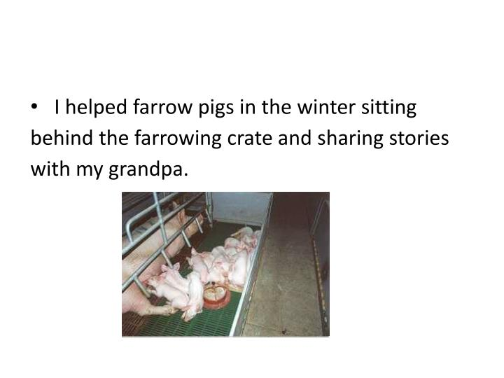 I helped farrow pigs in the winter sitting behind the farrowing crate and sharing stories with my grandpa.