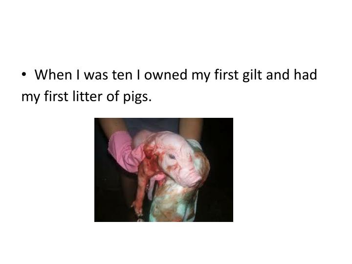 When I was ten I owned my first gilt and had my first litter of pigs.