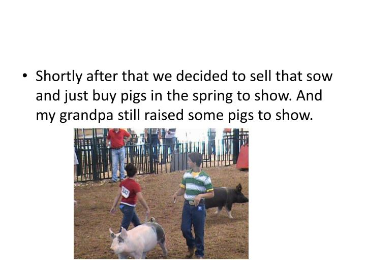 Shortly after that we decided to sell that sow and just buy pigs in the spring to show. And my grandpa still raised some pigs to show.