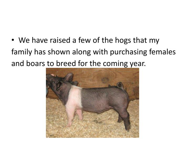 We have raised a few of the hogs that my family has shown along with purchasing females and boars to breed for the coming year.