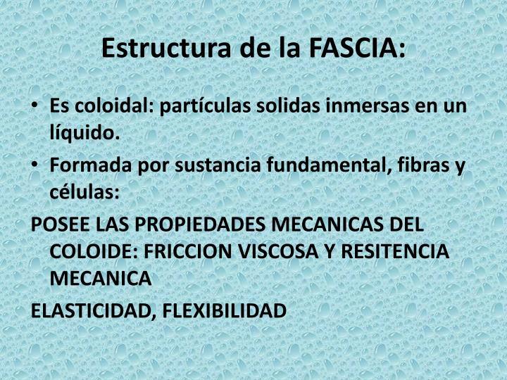 Estructura de la FASCIA: