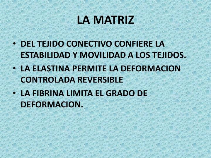 LA MATRIZ