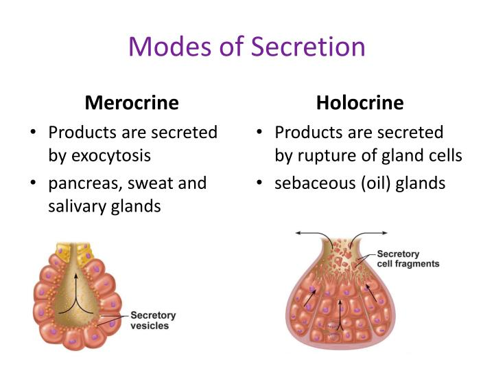 Modes of Secretion
