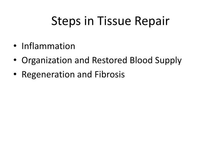 Steps in Tissue Repair