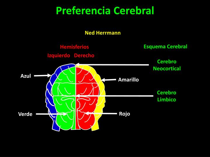 Esquema Cerebral