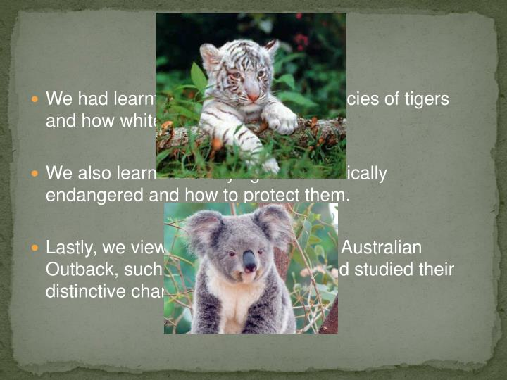 We had learnt about the different species of tigers and how white tigers came about.