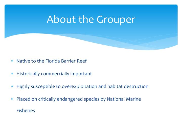 About the Grouper