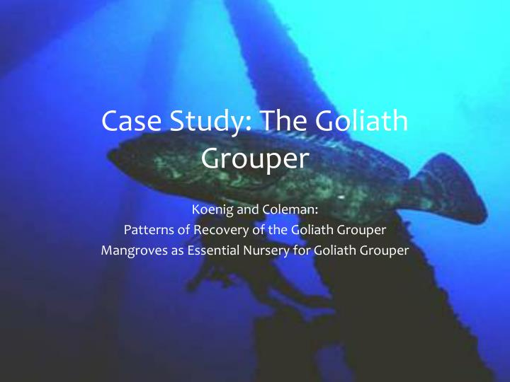 Case Study: The Goliath Grouper