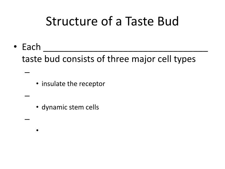 Structure of a taste bud