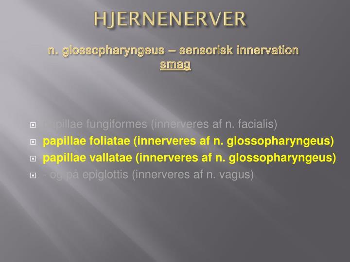 HJERNENERVER