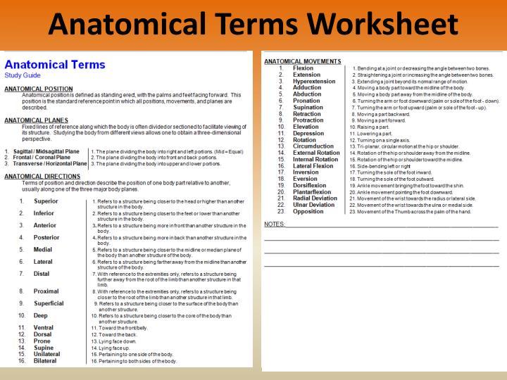 Printables Anatomical Terminology Worksheet anatomical terms worksheet davezan ppt position powerpoint presentation id 2185193