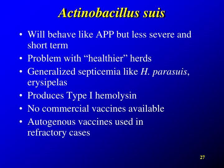 Actinobacillus suis