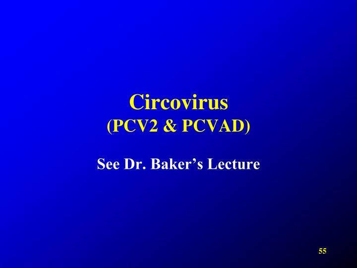 Circovirus