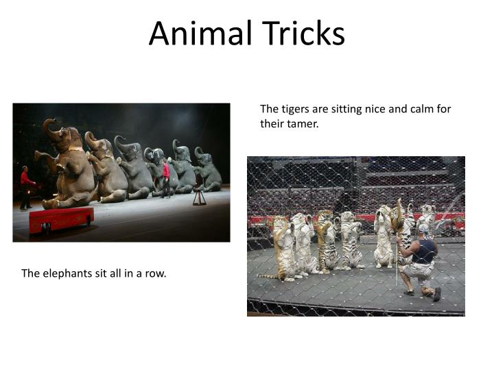 Animal Tricks
