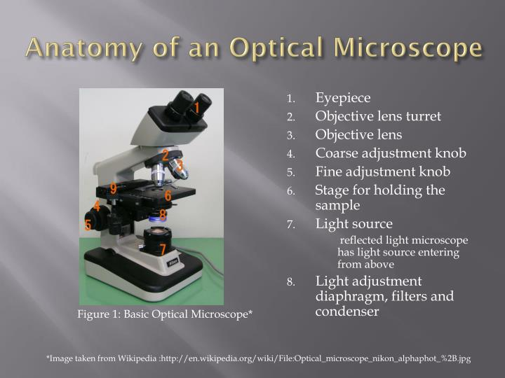 Anatomy of an Optical Microscope