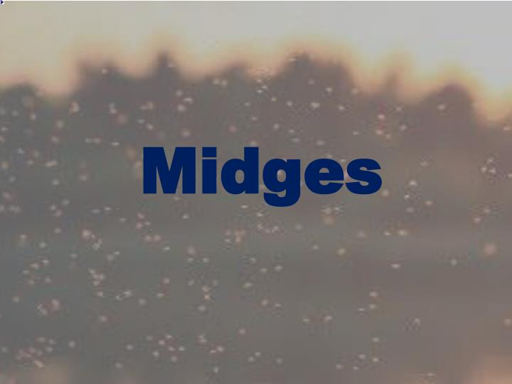 Midges