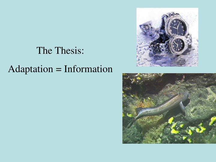 The Thesis:
