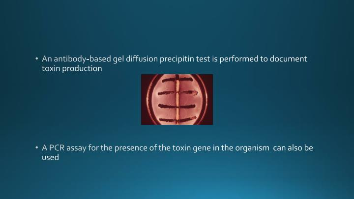 An antibody-based gel diffusion precipitin test is performed to document toxin production