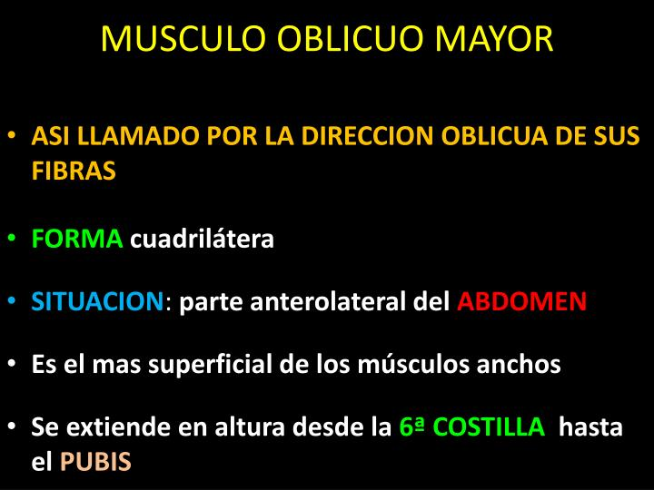 MUSCULO OBLICUO MAYOR