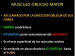 musculo oblicuo mayor