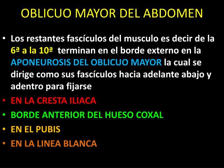OBLICUO MAYOR DEL ABDOMEN