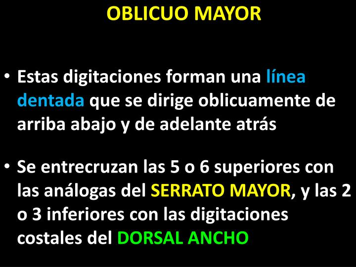 OBLICUO MAYOR