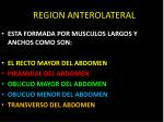 r region anterolateral
