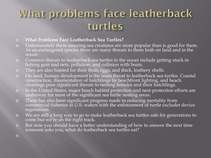 What problems face leatherback turtles