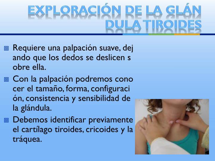 Exploración de la glándula tiroides
