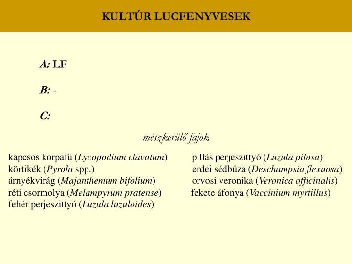 KULTÚR LUCFENYVESEK