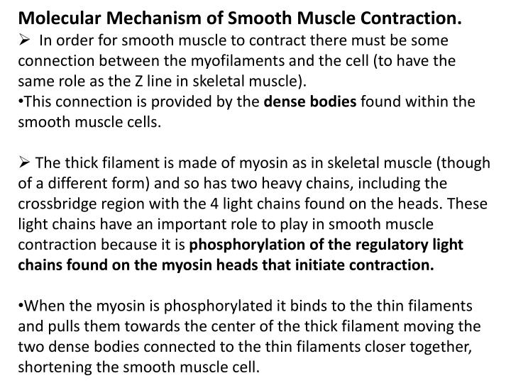Molecular Mechanism of Smooth Muscle Contraction.