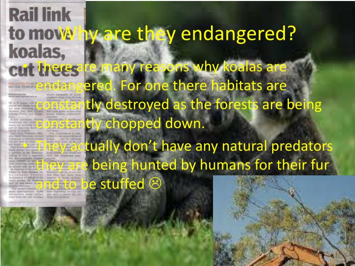 Why are they endangered?