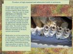 function of high crowned and selenodont teeth in ruminants