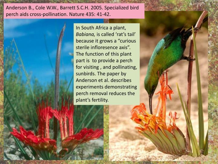 Anderson B., Cole W.W., Barrett S.C.H. 2005. Specialized bird perch aids cross-pollination. Nature 435: 41-42.