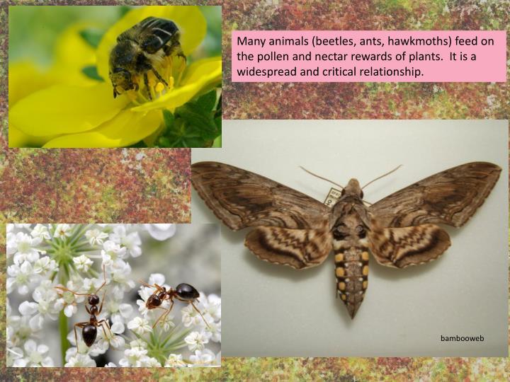Many animals (beetles, ants, hawkmoths)