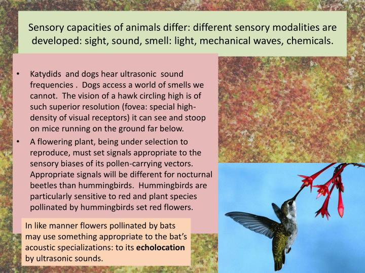 Sensory capacities of animals differ: different sensory modalities are developed: sight, sound, smell: light, mechanical waves, chemicals.