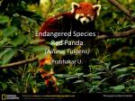 endangered species red panda ailurus fulgens