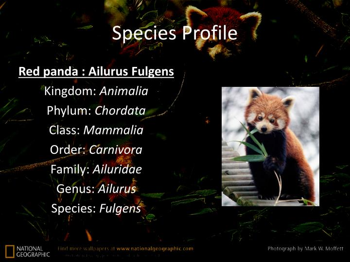 Species Profile