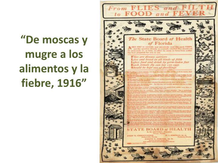 """""""De moscas y mugre a los alimentos y la fiebre, 1916"""""""