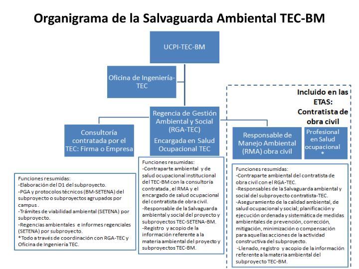 Organigrama de la Salvaguarda Ambiental TEC-BM