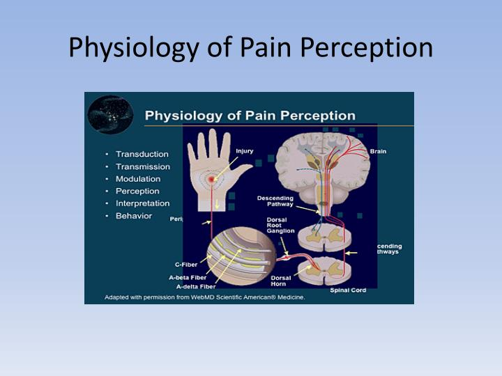 Physiology of Pain Perception