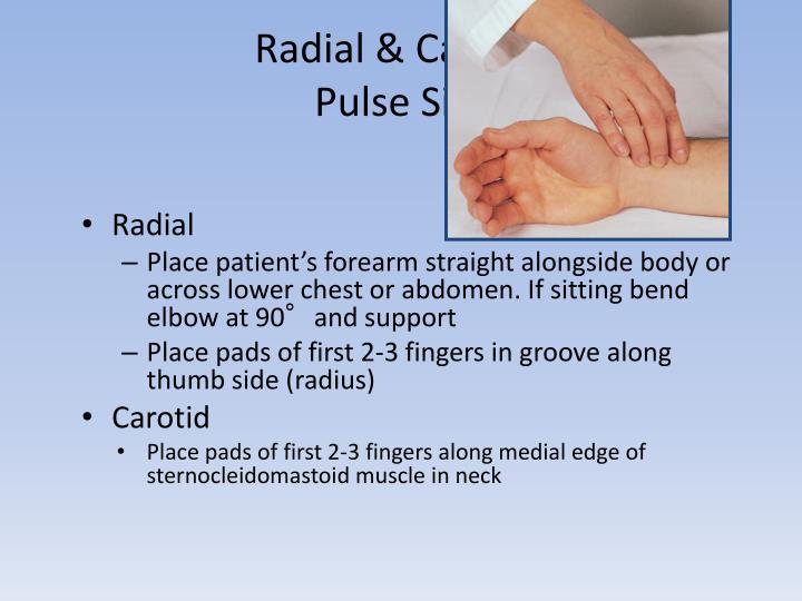 Radial & Carotid