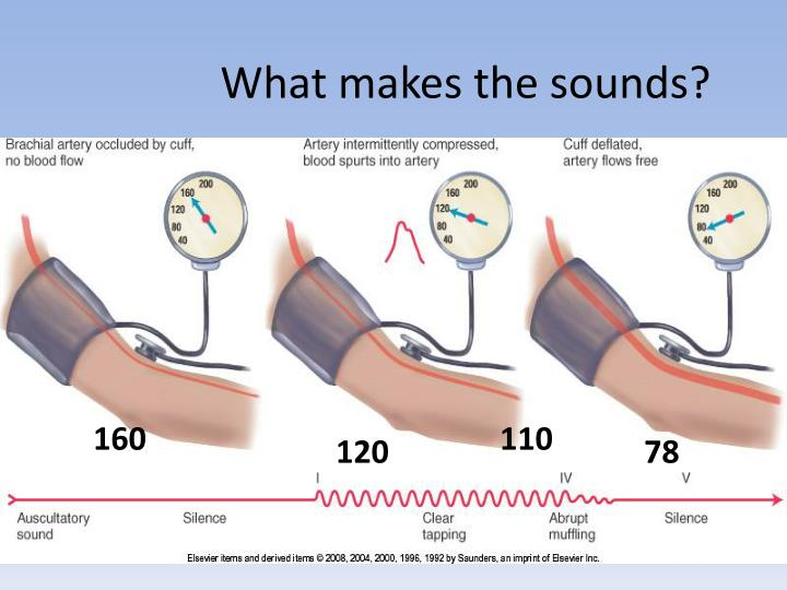 What makes the sounds?