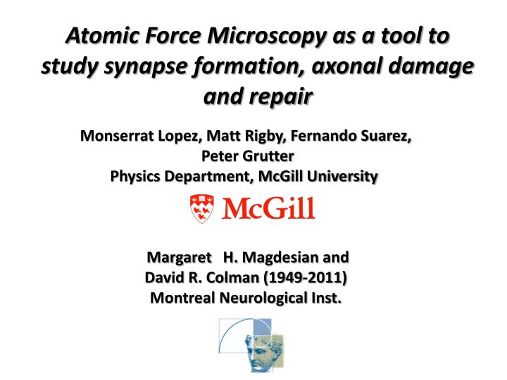 Atomic Force Microscopy as a tool to study synapse formation, axonal damage and repair