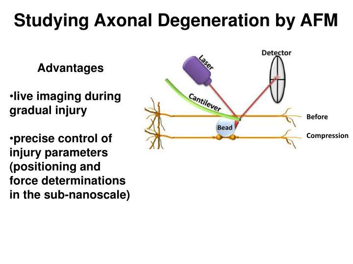 Studying Axonal Degeneration by AFM