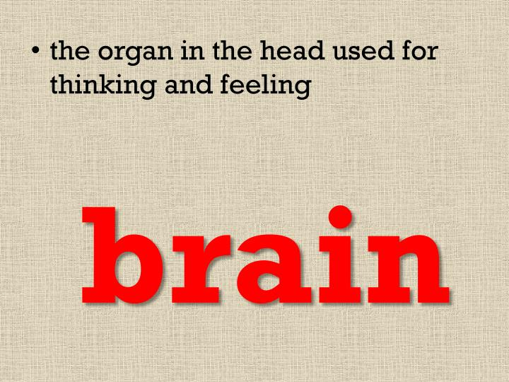 the organ in the head used for thinking and feeling