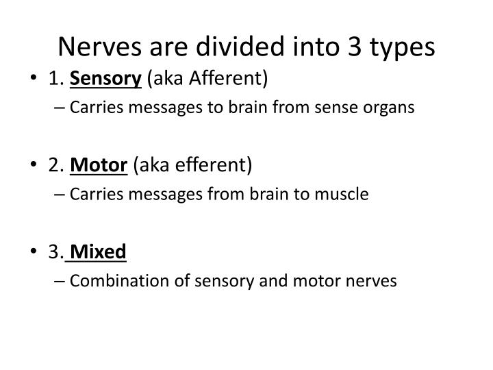 Nerves are divided into 3 types