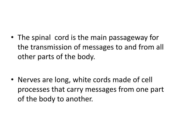 The spinal  cord is the main passageway for the transmission of messages to and from all other parts of the body.