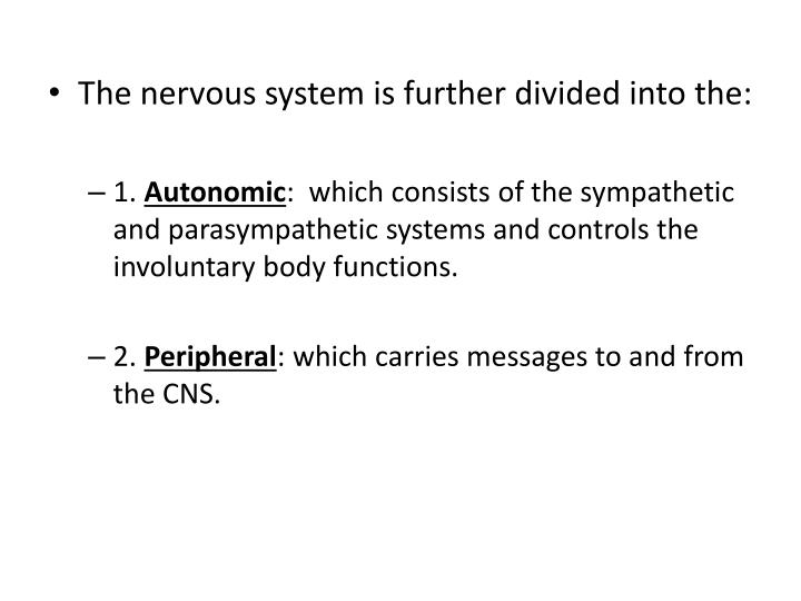 The nervous system is further divided into the: